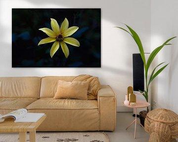 Gele bloem in het donker van Lizet Wesselman