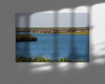 Oostvaardersplassen met de Paardenkudde nog in z,n geheel aan het Water.