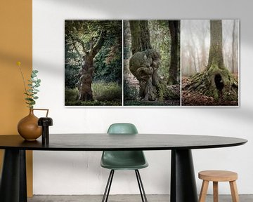 Three - trees 1 van Ton de Jong