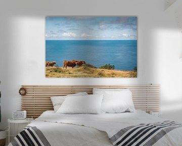 Koeien op de achtergrond van de Oostzee van Yana