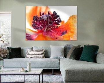 Eruption of colors... (II) (bloem, klaproos, lente, oranje) von Bob Daalder