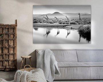 Giraffen in schwarz-weiß am Wasser von Patries Photo