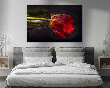 Rote Tulpe von natascha verbij