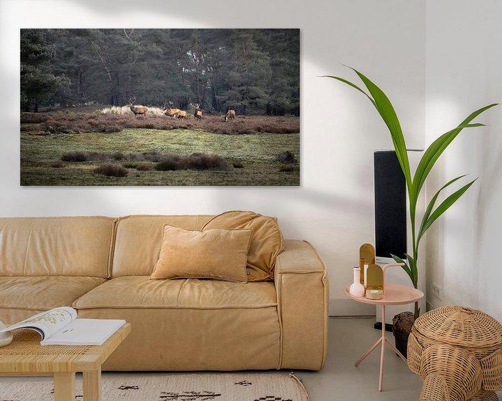 Impression: Cerf rouge sur le Hoge Veluwe sur Ton Drijfhamer