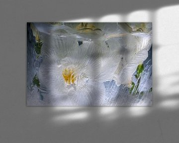 Weiße Freesie in Eis 2 von Marc Heiligenstein