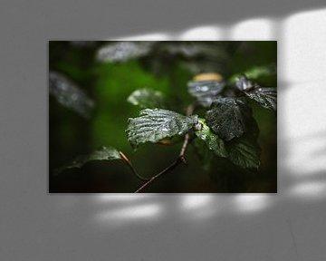 Dunkelgrüne Blätter von Maarten Borsje