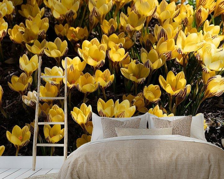 Sfeerimpressie behang: Gele krokussen van Jim van Iterson