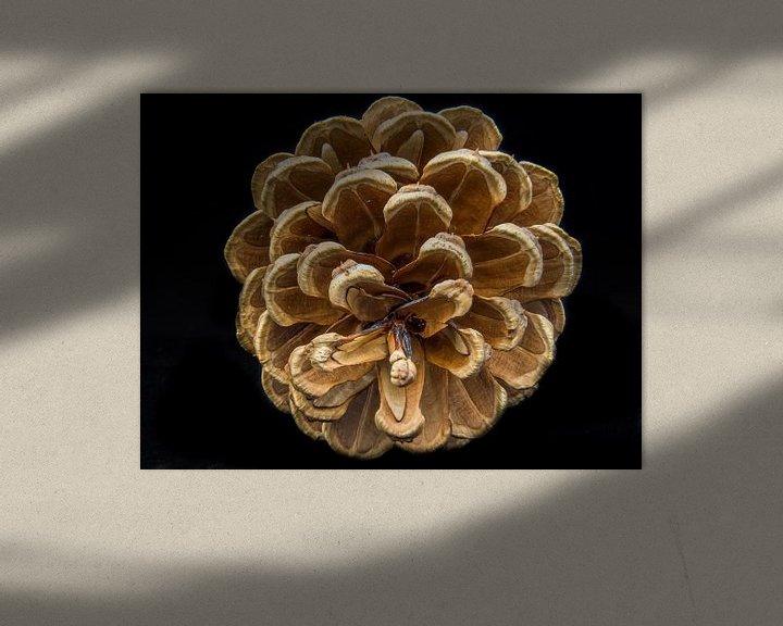 Sfeerimpressie: Dennenappel in kleur van Martijn Tilroe