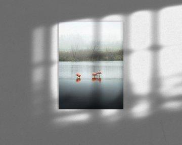 Flamingo's, slapend (staande modus) van Claire Droppert