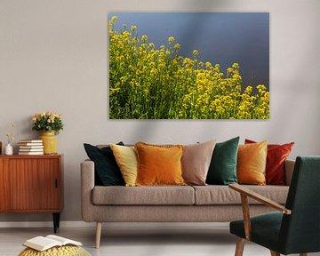 Schöne gelbe Blumen im Frühling von Nel Diepstraten