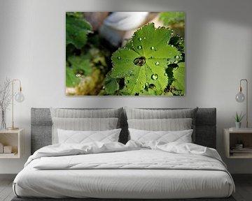 Frischer Sommerregen von Marije Zwart