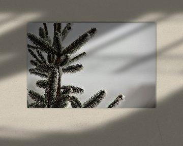 Witte kerst van Marije Zwart