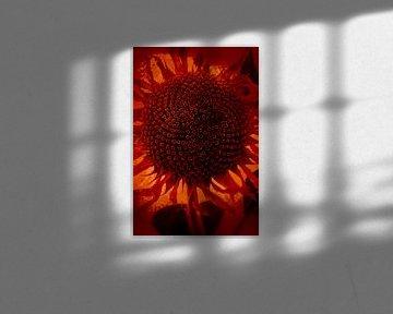 Sonnenblume von Anouschka Hendriks