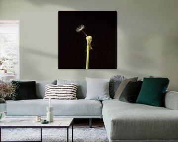 Laatste vruchtpluis paardenbloem von Ramona Stravers