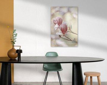 Magnolia van Lars van de Goor