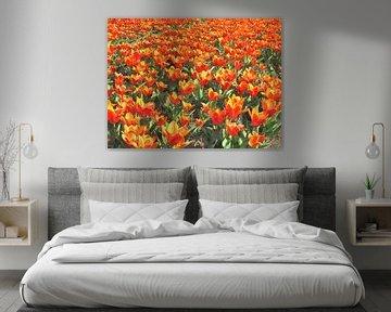Tulips of Orange von Floris De Mol