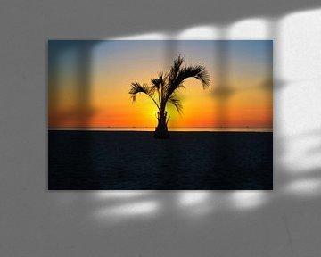 Eine Palme im Sonnenunteregang