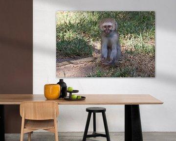 Bettelnder Affe von Marijke Arends-Meiring