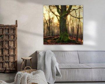 De boom van Marion Kraus