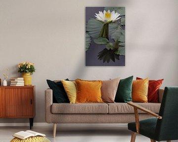 Wasserlilie von Marijke Arends-Meiring