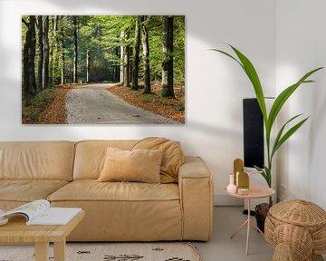 Beukenlaan in herfstkleed van Peter van Rooij