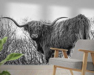 Een Schotse Hooglander zwart/wit van Wendy Tellier - Vastenhouw