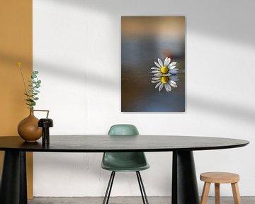 Gänseblümchen in Regenpfütze von Willian Goedhart
