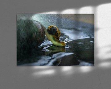 Schnecke im Regen von Willian Goedhart