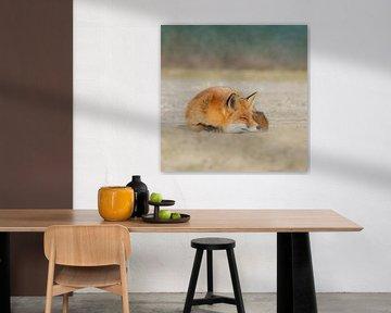 Fuchs von Anna Stelloo