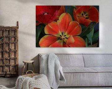 Tulpen von nataschja van der Woude-de Jong