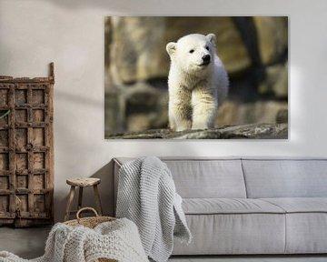 Kleiner Eisbär von Frank Herrmann