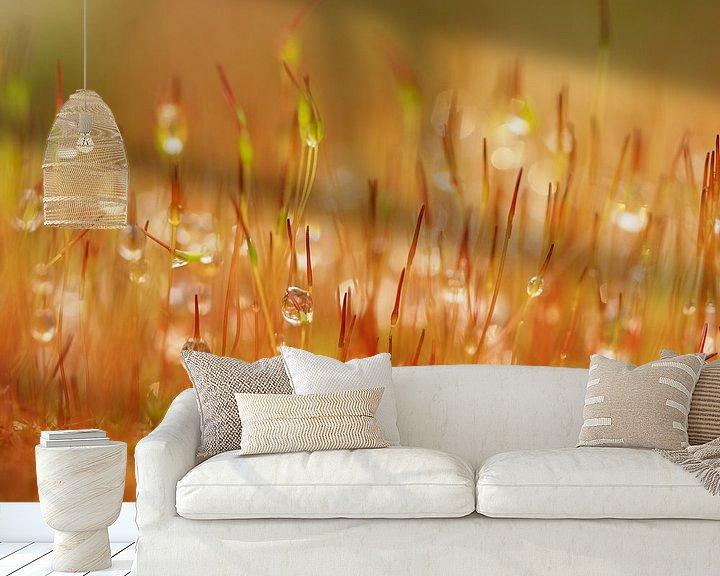 Sfeerimpressie behang: Herfstbos en regendruppels en mos van Marjanne van der Linden