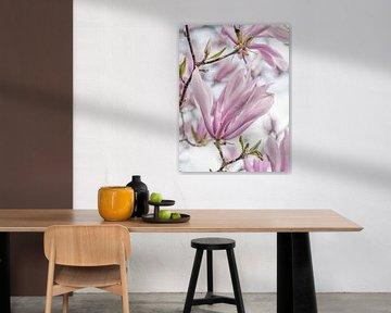 bloesem van een rijk bloeiende magnolia met mooie pastel tinten