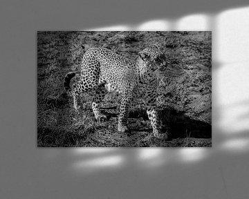 Leopard von Laura Koppen