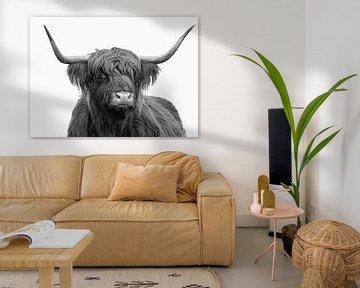 Portrait Schottischer Hochländer schwarz-weißer voll-weißer Hintergrund von Marjolein van Middelkoop