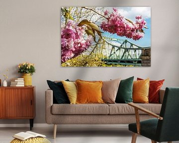 Fleurs de cerisier avec le pont Glienicke
