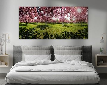 Kirschblütenpark