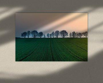 Paysage avec du jeune grain sur Marianne Twijnstra-Gerrits