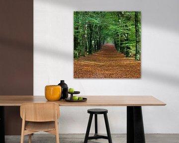 Kap-Wälder von Johan Zwarthoed