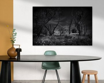 Ein Wald von Johanna Blankenstein