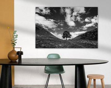 Ein Baum von Johanna Blankenstein