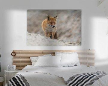 Sand-Fuchs von Anna Stelloo