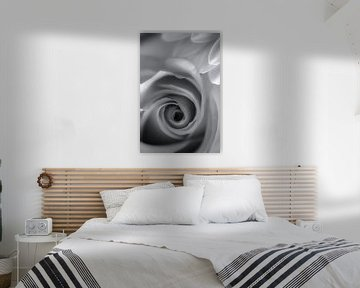 Die weiße Rose von Rik Verslype