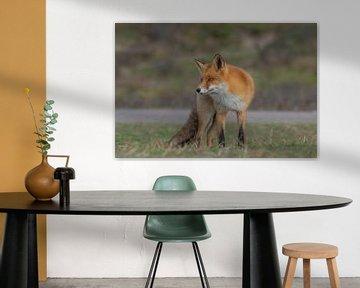 Le renard gras sur Anna Stelloo