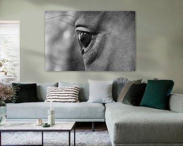 Augenkontakt schwarz-weiß von J..M de Jong-Jansen