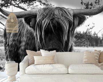 Schotse hooglander op de Strabrechtseheide van Natasja Bittner