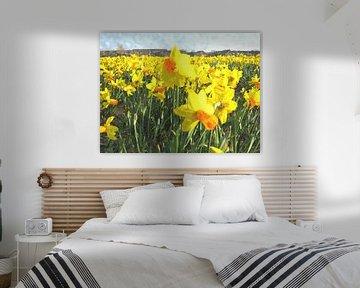 Daffodils von Floris De Mol