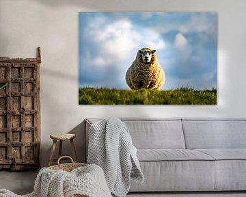 Moeder schaap Texel van Texel360Fotografie Richard Heerschap