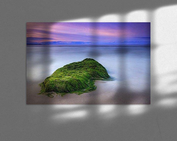 Beispiel: Seetang am Strand von Frank Herrmann