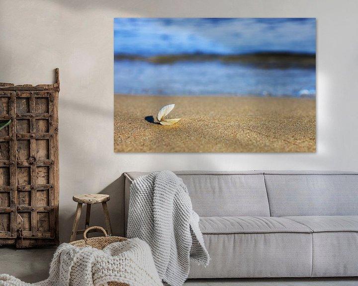 Beispiel: Eine offene Muschel am Strand von Frank Herrmann